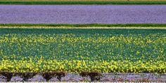BEAUTIFULLY BIZARRE PLACES AROUND THE WORLD Part - VII Dutch Flower fields, Holland