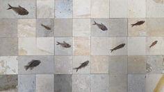 Fossil fish mural