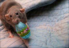 Pet rat easter egg <3