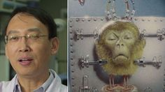 Chinese surgeon that spliced the heads of 1, 000 mice now wants to try monkey head transplants! | YouSignAnimals.org