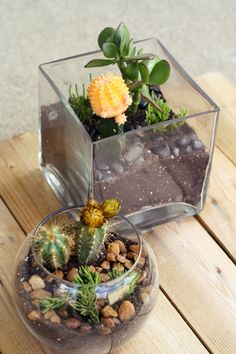 My first ever attempt at making terrariums. Definitely can't wait to make more!