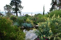 Dan Hinkley's garden at Windcliff, WA.  great view, lovely little mix of plants
