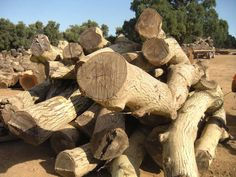 Just got a stack of walnut logs. They look fantastic!