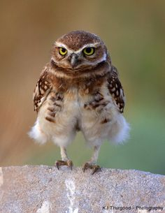 Day 166, Beautiful World - Burrowing Owl