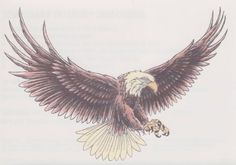 Aigle Géant | TattooForAWeek.com - Tatouages Temporaires . - tatouage temporaire - Oiseaux - CH/F3-32