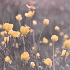 Flower Art Print Dreamy Romantic Flowers by MarascaPhotography.  Must get to hang in back office.