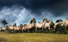 Rennende Wildpferde_Quelle EMS Films