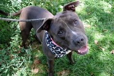 ARIZONA – A1087140Safe - 8-31-2016 ManhattanRescue: Posh Pets RescuePlease honor your pledges: http://poshpetsrescue.org/ways-to-help/