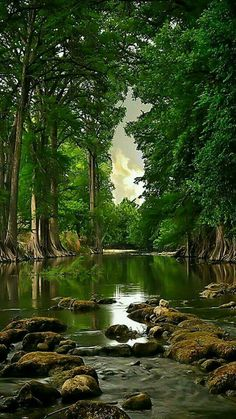 landscaping trees river forest landscape nature x 1600 906 kb jpeg x Landscape Photography, Nature Photography, Photography Wallpapers, Beautiful Places, Beautiful Pictures, Beautiful Forest, Trees Beautiful, Amazing Photos, Wonderful Places