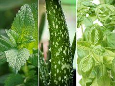 5 bent is nevelhető növény, amely gyógyít – hányat ismersz közülük?