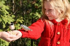 Montessori-Inspired Bird Lessons from Age of Montessori