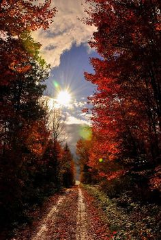 michellesplace: I love Fall!!! :) Me too!!! Best time of the year!!!