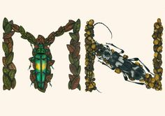 This Insect Alphabet Took Me 2 Years To Complete | Bored Panda