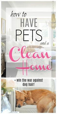 14 Clever Deep Cleaning Tips & Tricks Every Clean Freak Needs To Know Dog Cleaning, House Cleaning Tips, Spring Cleaning, Cleaning Hacks, Pet Care Tips, Dog Care, Puppy Care, Pets, Pet Dogs