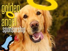 Golden Retriever Rescue Resource - Adopt A Golden Retriever Rescue Golden Retriever Rescue, Golden Retrievers, Happy Birthday Dad, Left Alone, Rescue Dogs, Toledo Ohio, Puppies, Pet Adoption, Indiana