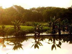 Parque del este caracas venezuela