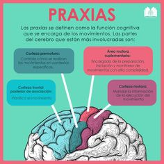 Pin on Educacion Gross Anatomy, Brain Anatomy, Medical Anatomy, Physical Therapy School, Gm Diet Plans, Medicine Notes, Life Guide, Med Student, Kids Education
