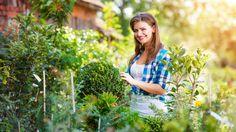 Bylinky jsou skvělá věc. Ochutí jídlo, provoní domácnost, zafungují proti různým nemocem, urychlí hojení... My jsme se zaměřili na volně rostoucí v přírodě, tedy ty, za které neutratíte ani korunu. Jaké sbírat zrovna nyní?