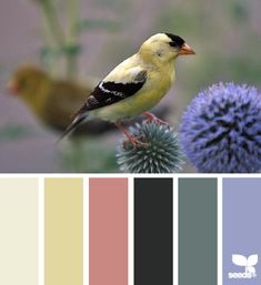 goldfinch hues