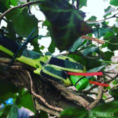 Snakey little geocache! ;) Some people might be scared of this one, though it's pretty obvious when you look closely it's not real. (pic by UK_Geocacher on Twitter) #IBGCp