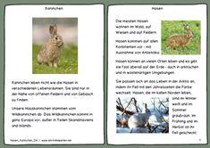 Hasen und Kaninchen (3. bis 5. Kl.)