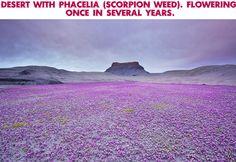 Desert in bloom....wow!