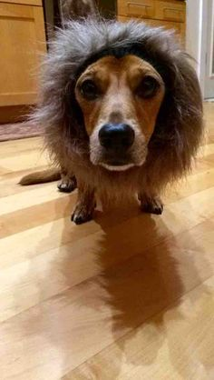 Oscar with his lion costume