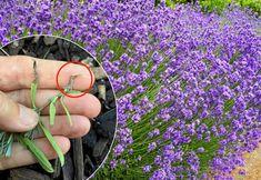 Dream Garden, Air Plants, Gardening Tips, Flower Power, Land, Planters, Flowers, Happy, Sink Tops