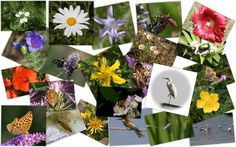 LIFE , i cittadini in campo per aiutare l'ambiente e la scienza