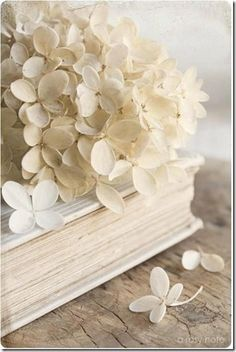flores-facebook-tumblr-rosas-las flores-fotos de flores-757