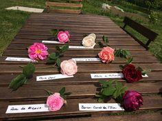 Rose antiche in vivaio a Cascina Vicentini