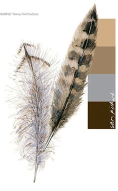 Planet Sam: Colour from the Season - Owl Feather brown
