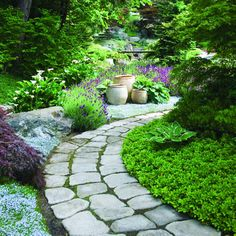 "Flanked by blue star creeper and Japanese spurge, a concrete ""stone"" path curves through The garden"