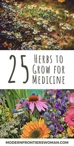 Planning a Survival Garden for Food and Medicine 25 Herbs to Grow for Medicine. Whether you are planting a survival garden out of necessity, preparedness, or simply to become more self reliant, you will. Medicine Garden, Herbal Medicine, Natural Medicine, Healing Herbs, Medicinal Plants, Gardening For Beginners, Gardening Tips, Container Gardening, Gardening Scissors