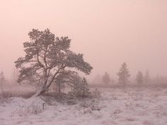 Fog cast red light on snow covered trees