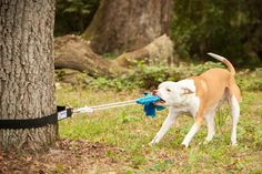 Super Tug - Strong Dog Toy - Safe Alternative to Spring Pole or Rope on Etsy, $29.99