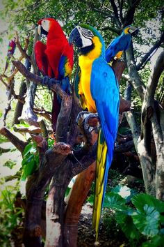 3 birds / parrots - taken by Andy Chan