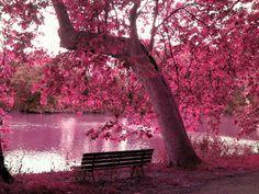 lagoa, floresta, árvores, bancos, galhos, folhas, outono, rosa, folhagem Vetor