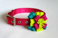 I think this is a very cute collar. Especially on a black or chocolate brown dog, the bright colors and pink will look stunning!