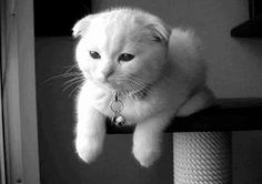 """El """"te quiero"""" gatuno es lo que necesitas"""