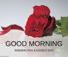 Looking for Beautiful Good Morning Images? Check out our collection of Beautiful HD Images, Photos, Pics, Wishes and Greetings to send on Whatsapp for Free. Good Day Images, Lovely Good Morning Images, Good Morning Beautiful Flowers, Good Morning Love Messages, Good Afternoon Quotes, Good Morning Roses, Good Morning Prayer, Good Morning Picture, Morning Pictures