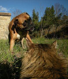 Boxer & Kitty