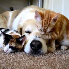 Bom dia para quem ficou na cama quentinho, curtindo mais uns minutinhos do soninho...Zzzzzz  Boa segunda feira pessoal!! =) #segundafeira, #diamundialdapreguica, #fofurices, #petlovers, #meuspetsmerecem, #caesegatos