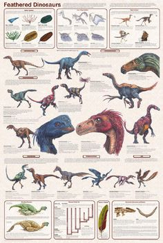 Feathered Dinosaurs are pretty cool unless they start being birds then not so legit. Dinosaur Facts, Dinosaur Posters, Dinosaur Fossils, Reptiles, Mammals, Feathered Dinosaurs, Especie Animal, Extinct Animals, Prehistoric Creatures
