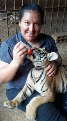 Visiting the Tiger Temple in Thailand.