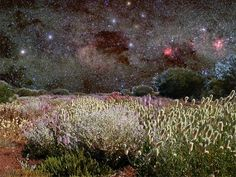 The Mid West region of Western Australia is world-renowned for its stunning wildflowers. It also has stunning night skies due to the lack of atmospheric and light pollution .