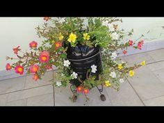 Ikebana, Portulaca Flowers, Ice Plant, Cactus, Garden, Plants, Youtube, Garden Waterfall, Orchids Garden