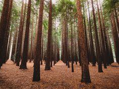Redwood Forest, Cement Creek Road, Warburton