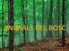 Bits animals del bosc