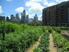 carthageagriculture / Urban Agriculture 3